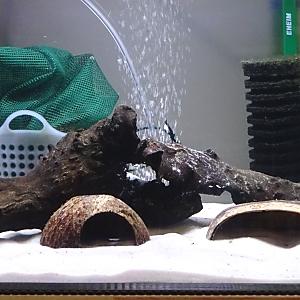 グリーンドワーフシクリッド専用水槽