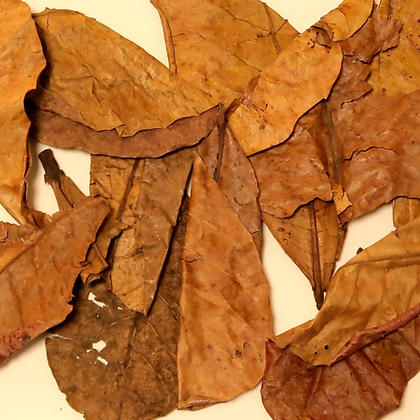 マジックリーフ magic leaf